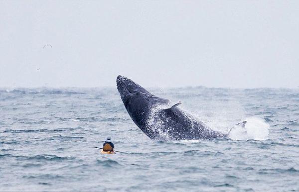 尽管冒着生面危险,阿文德和另一名皮划艇游客还是观看了鲸鱼出水的全